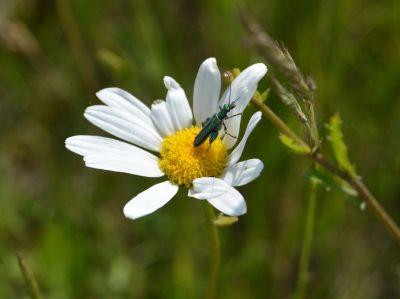 insektenschutz spannrahmen